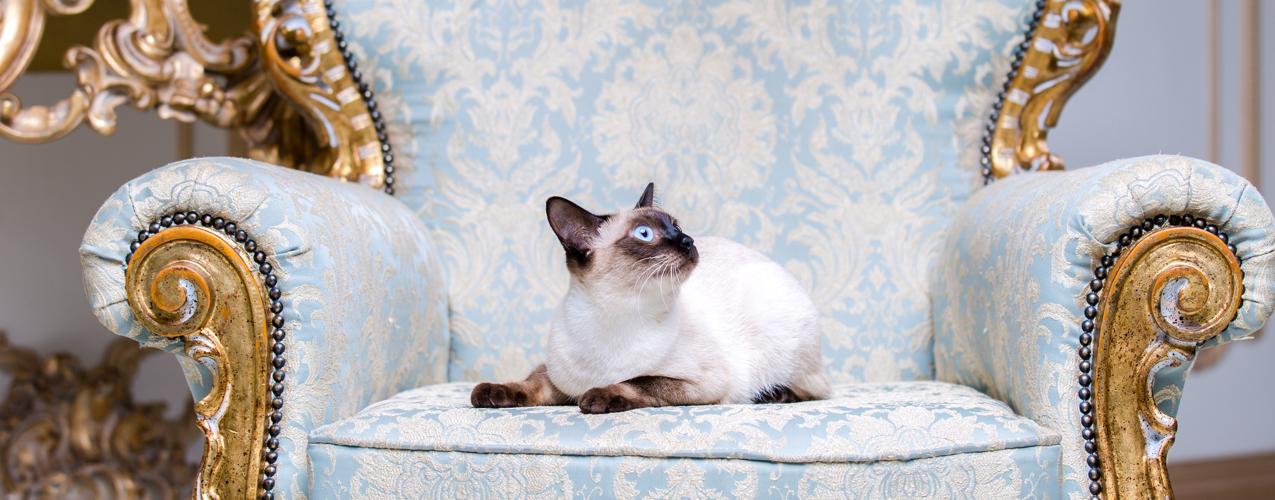 Una pareja decide gastar en su gato su premio millonario de lotería