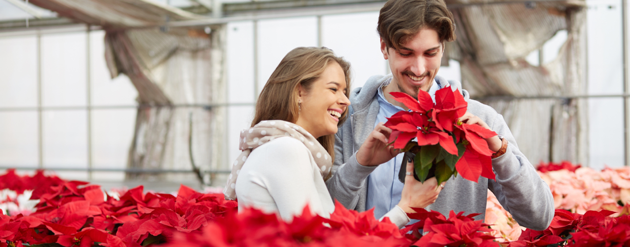 ¿Sabías que regalar una Nochebuena trae buena suerte?
