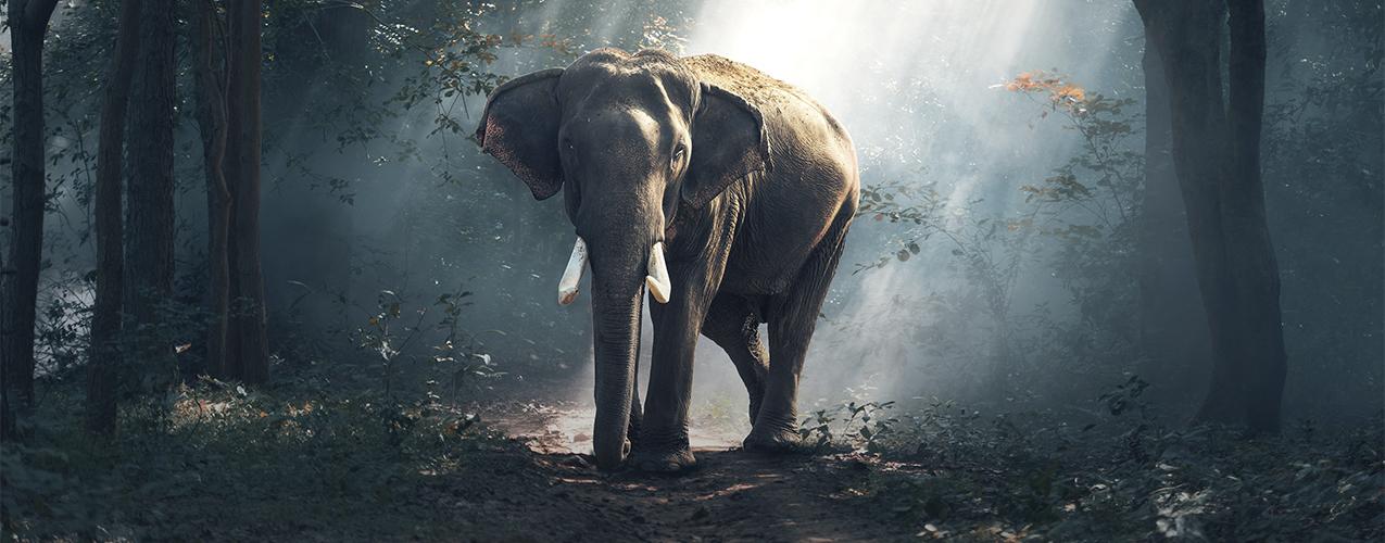 ¿Por qué se dice que los elefantes son de buena suerte?