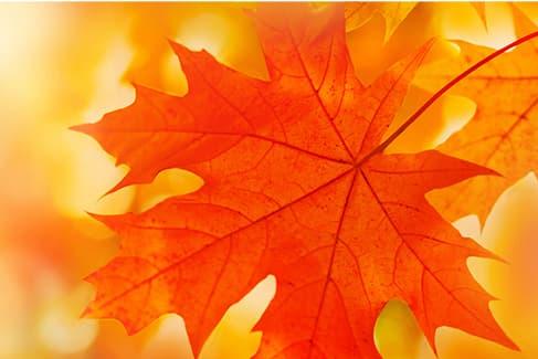 Recibe el otoño de la mejor manera